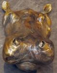 Hippo Head Study